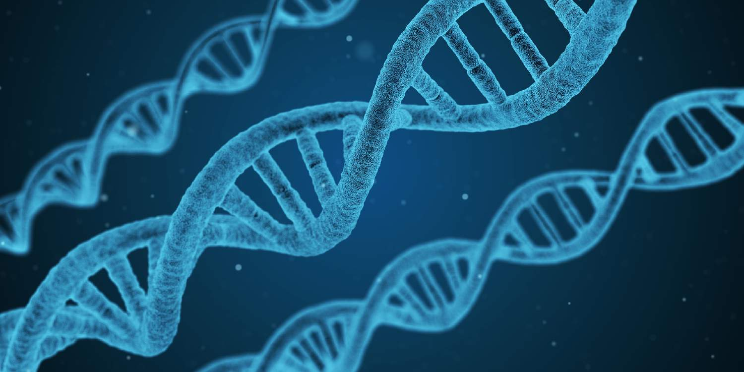 The science behind sexuality: is there a gay gene?