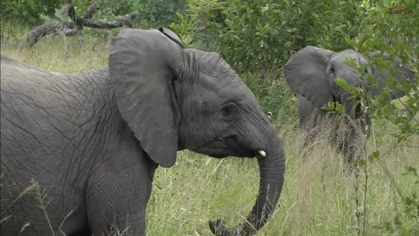 Live your lock-down holiday with Live Safaris