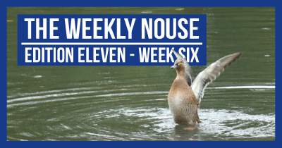 The Weekly Nouse Edition 11
